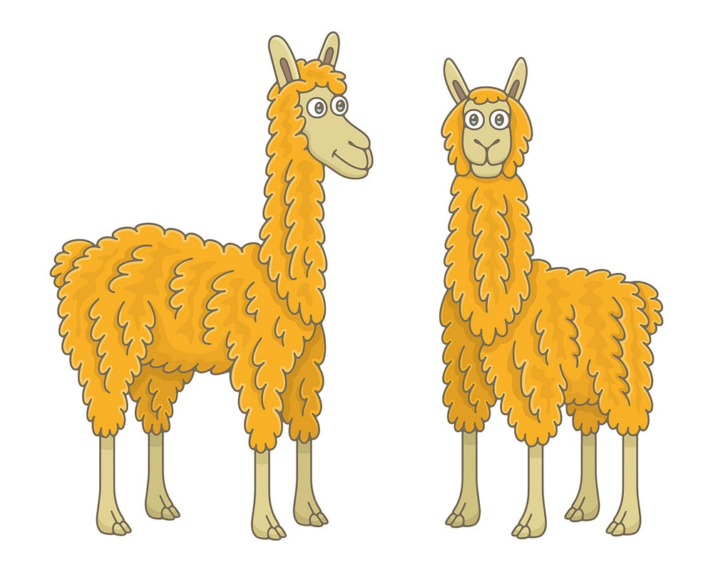two orange llamas