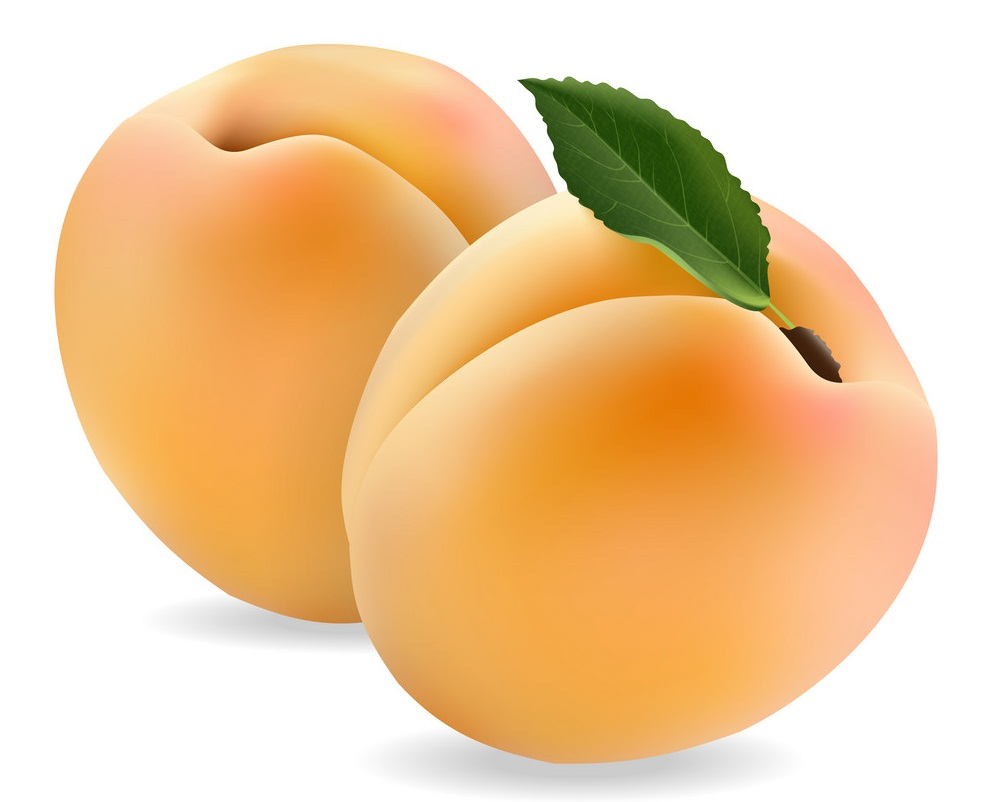 two realistic apricots