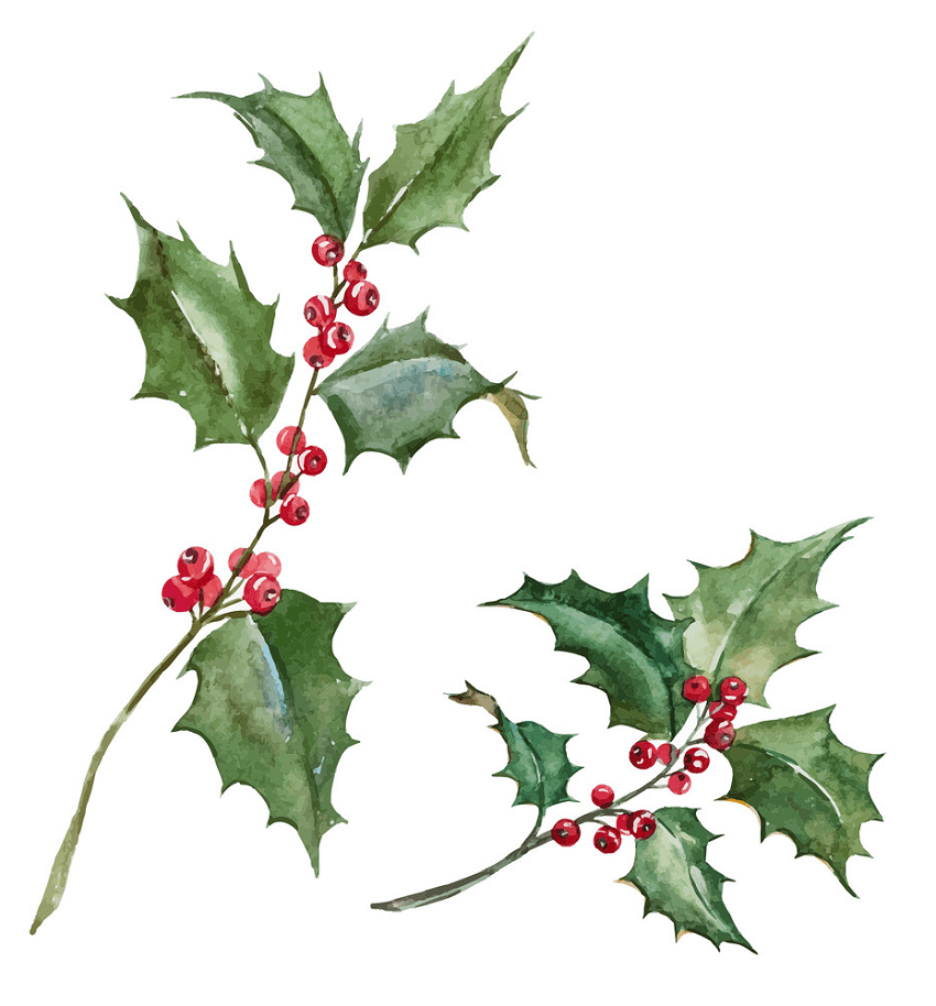 watercolor holly branch png
