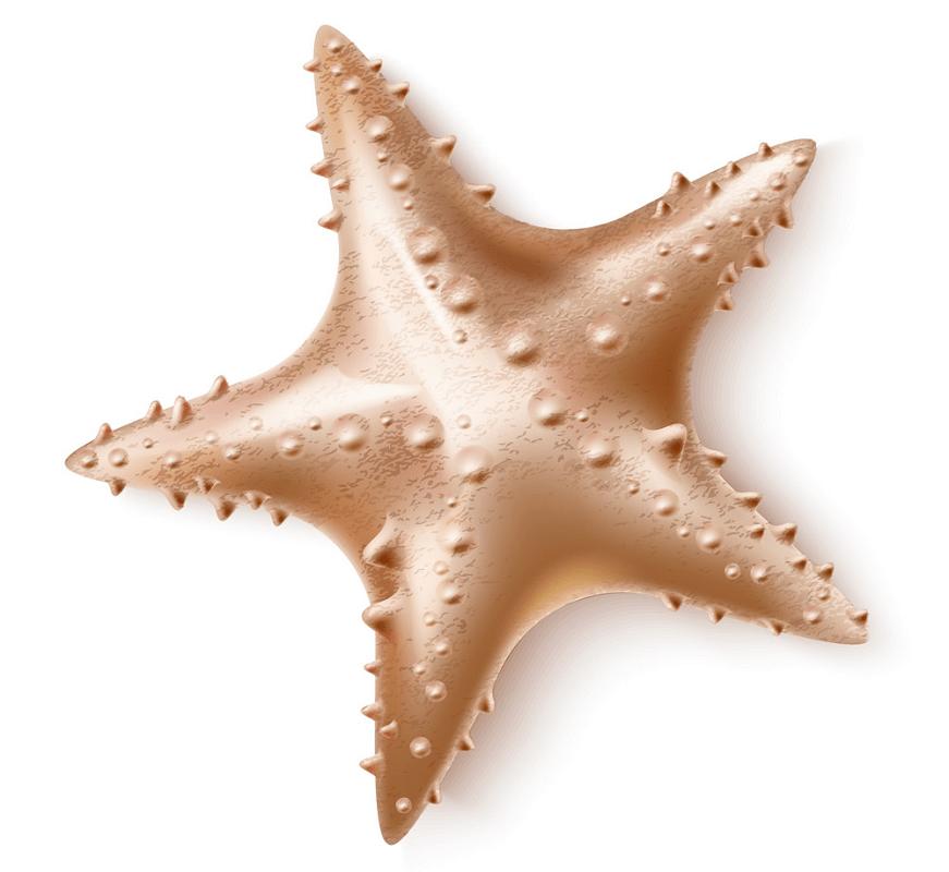 3D starfish png