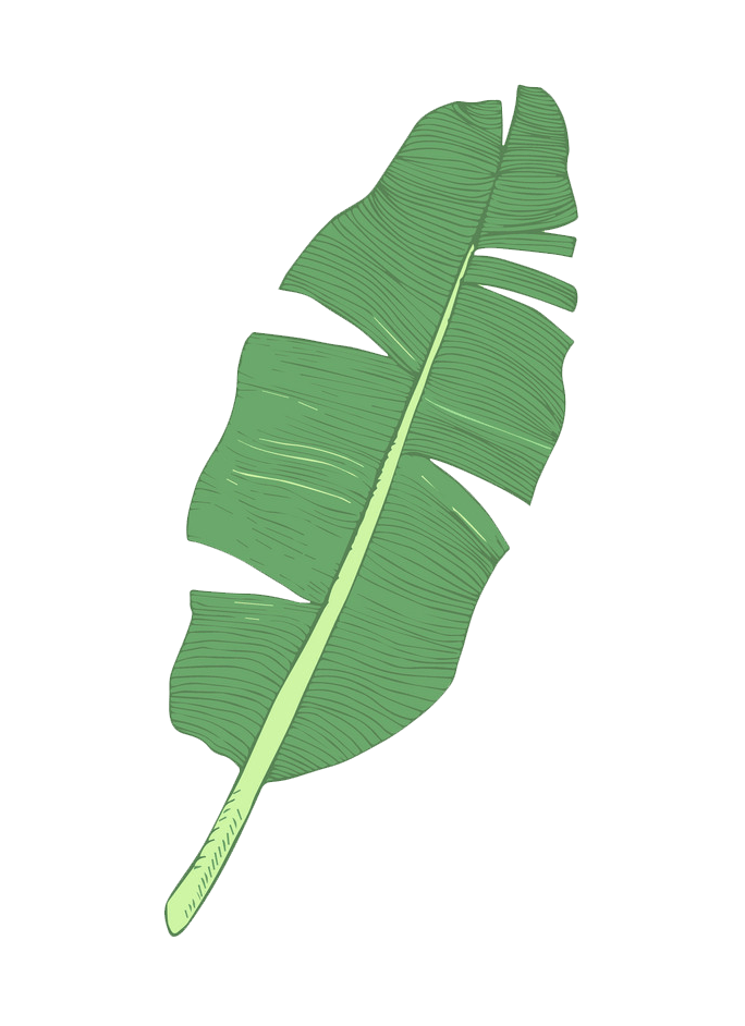 Banana leaf clipart transparent 1