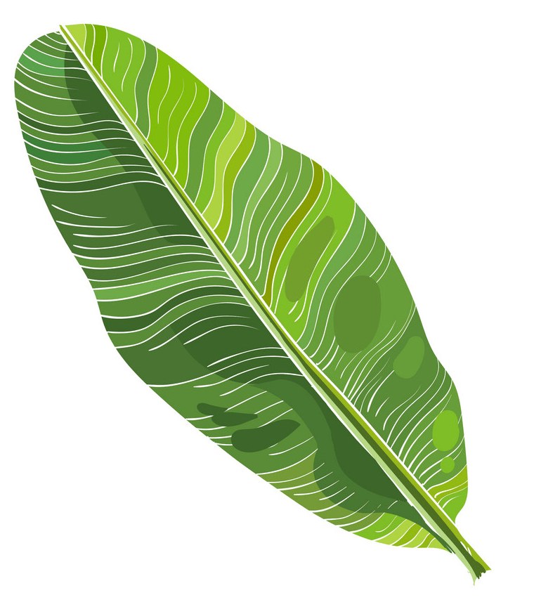 Banana leaf png