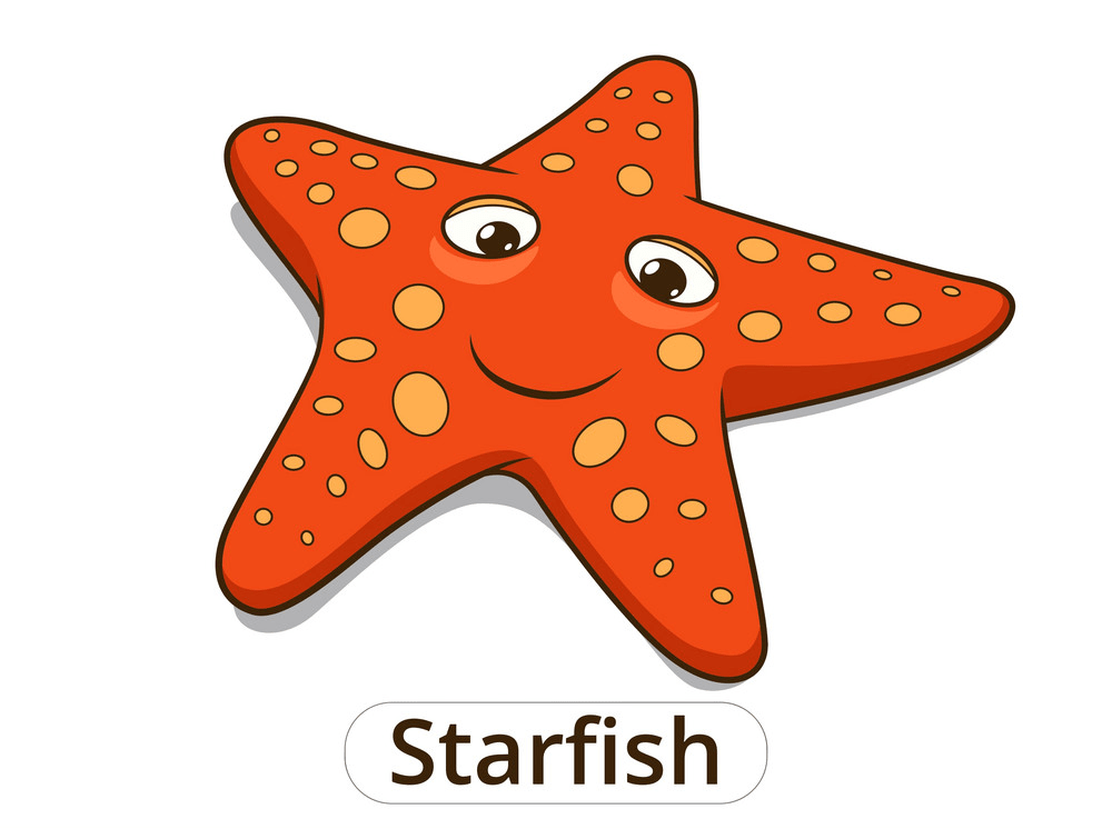 Cartoon starfish png