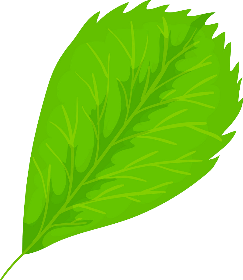 Elm leaf clipart transparent