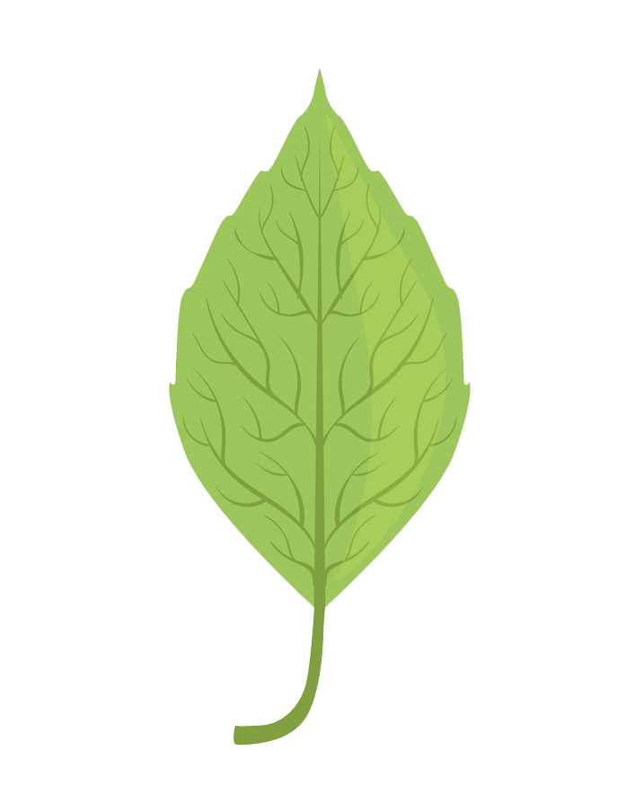 Elm tree green leaf clipart transparent
