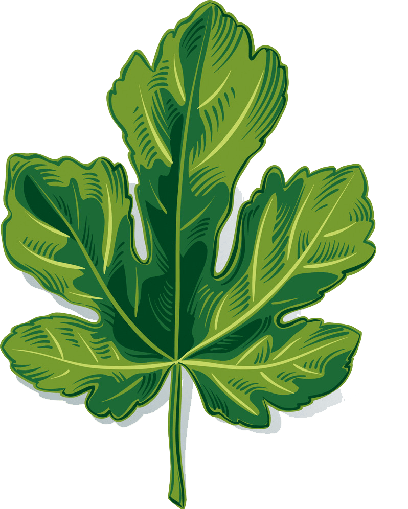 Fig leaf clipart transparent