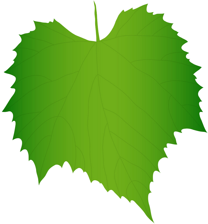 Green grape leaf clipart transparent