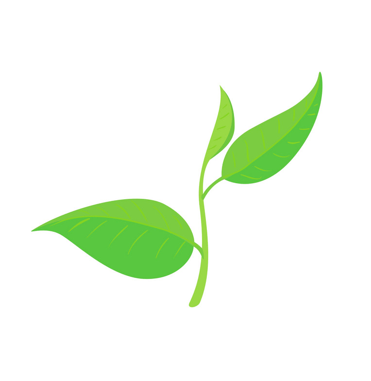 Green tea leaf png
