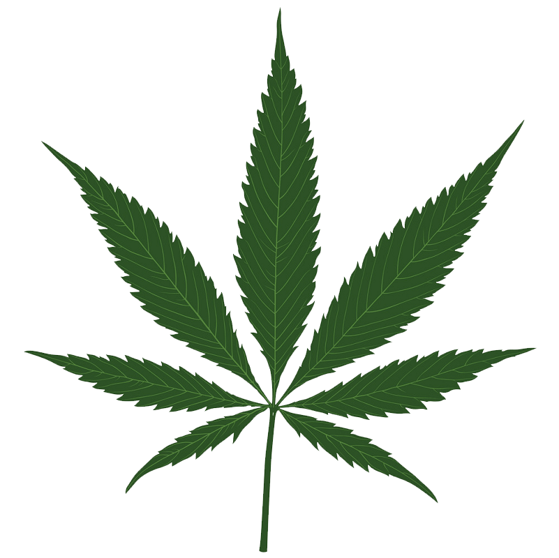 Hemp leaf clipart transparent