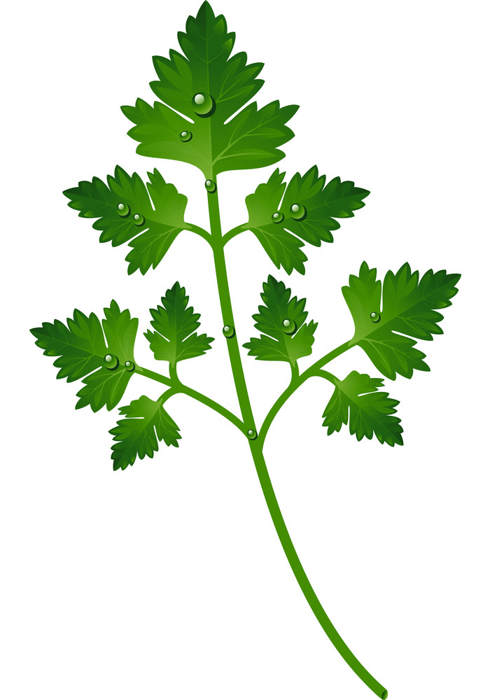Parsley leaf clipart
