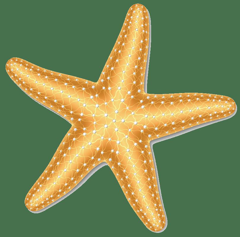 Starfish clipart transparent 1