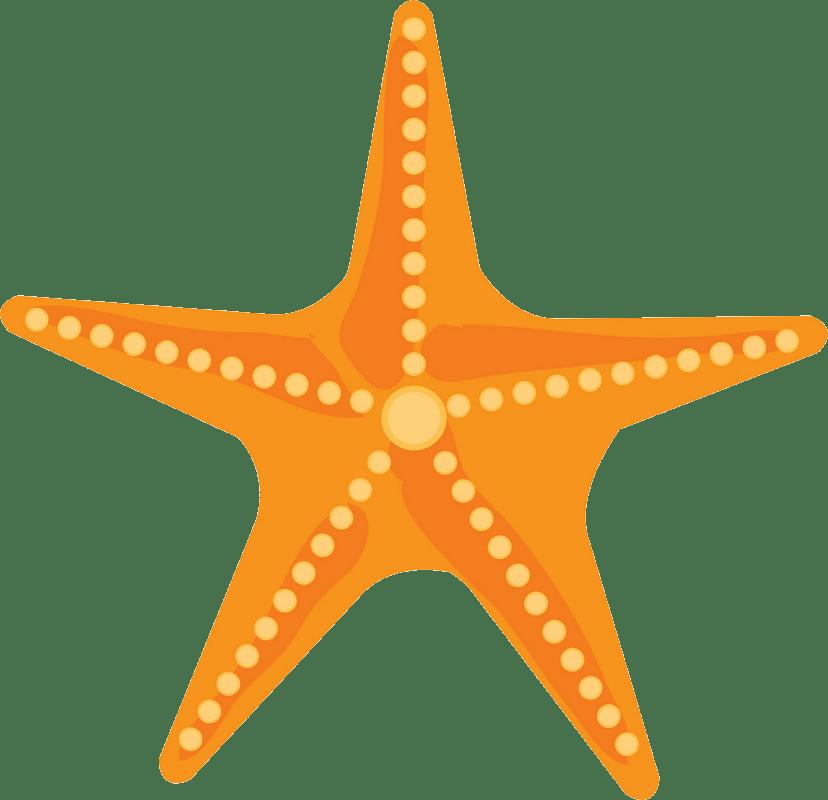 Starfish clipart transparent 2