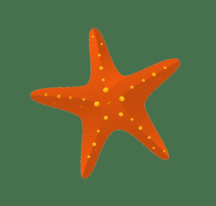 Starfish icon clipart transparent