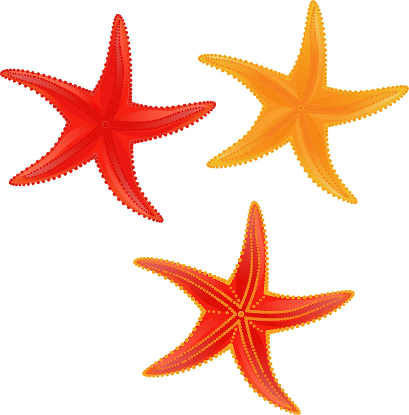 Starfishes clipart 1