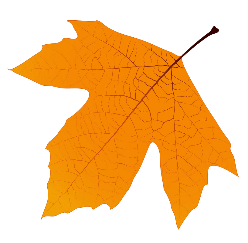 Sycamore Autumn Leaf clipart transparent