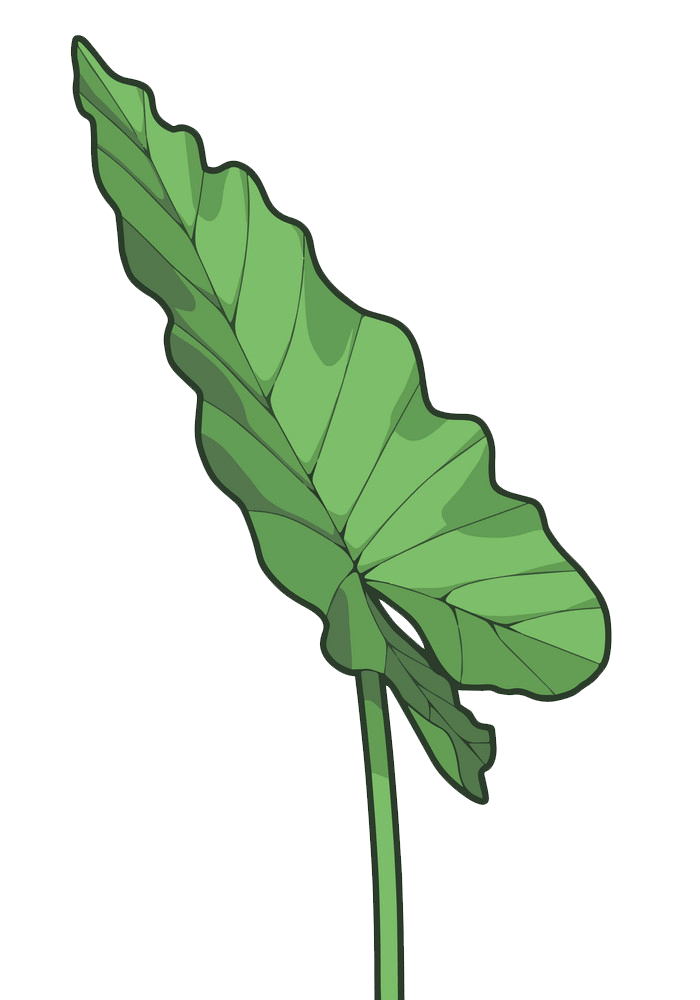 Taro leaf clipart transparent