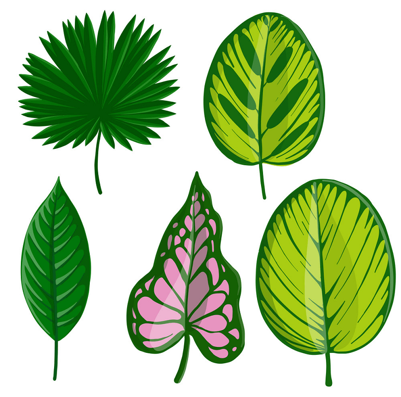 Tropical leaf png