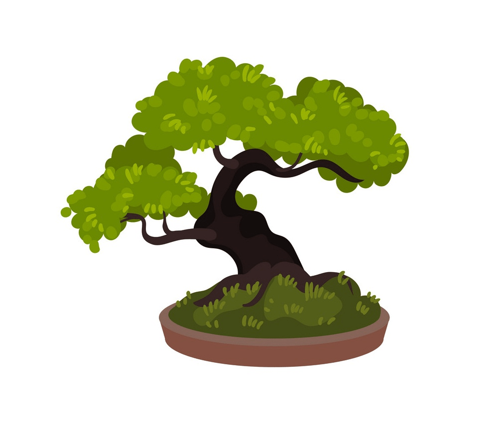 bonsai tree clipart 1