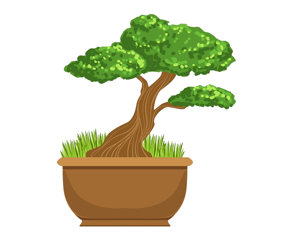bonsai tree clipart transparent