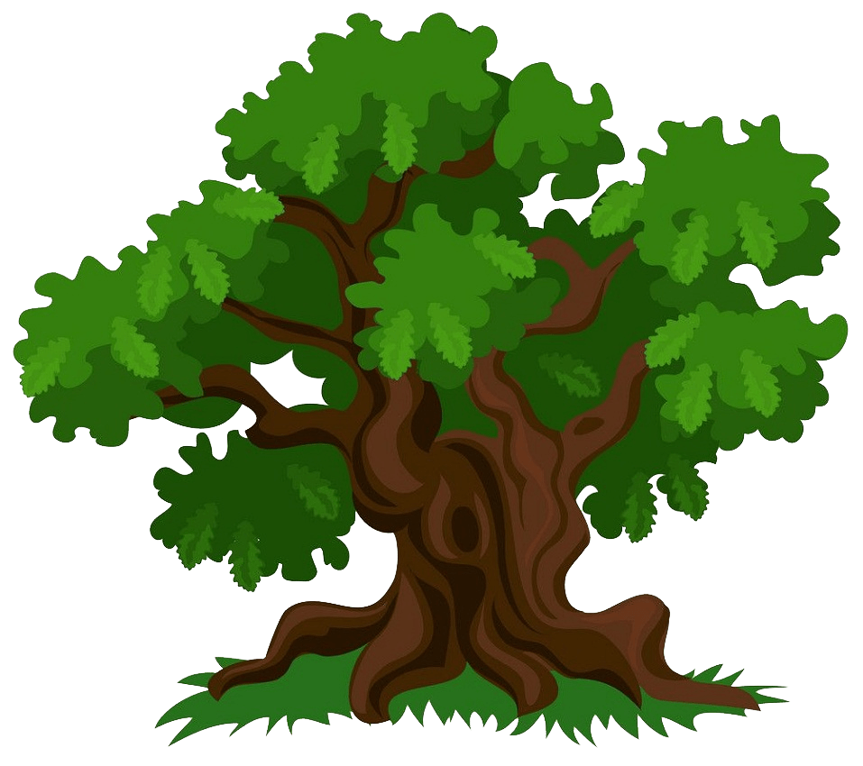 green oak tree clipart transparent