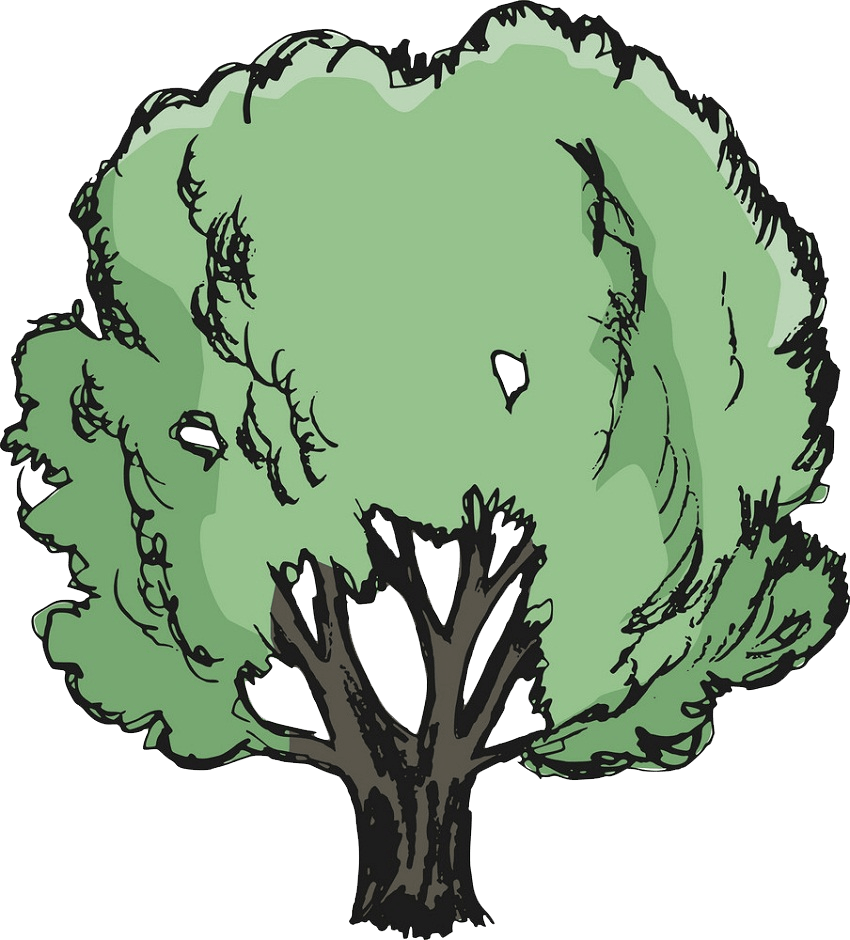 oak tree clipart transparent