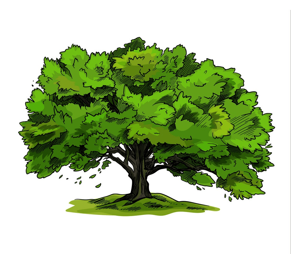 oak tree clipart