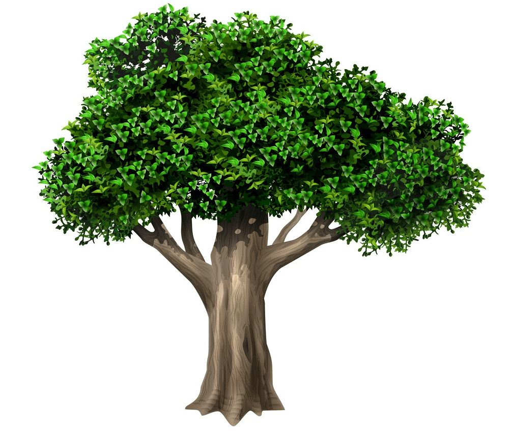 realistic old oak tree png