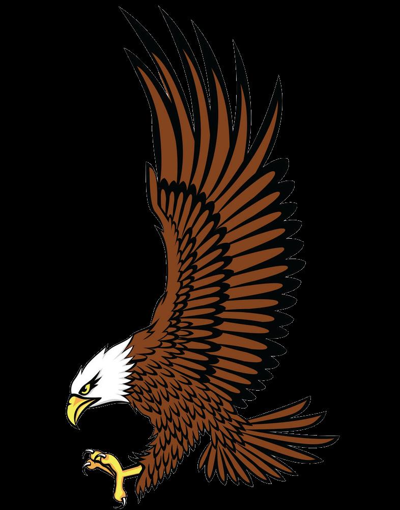 Bald Eagle clipart transparent