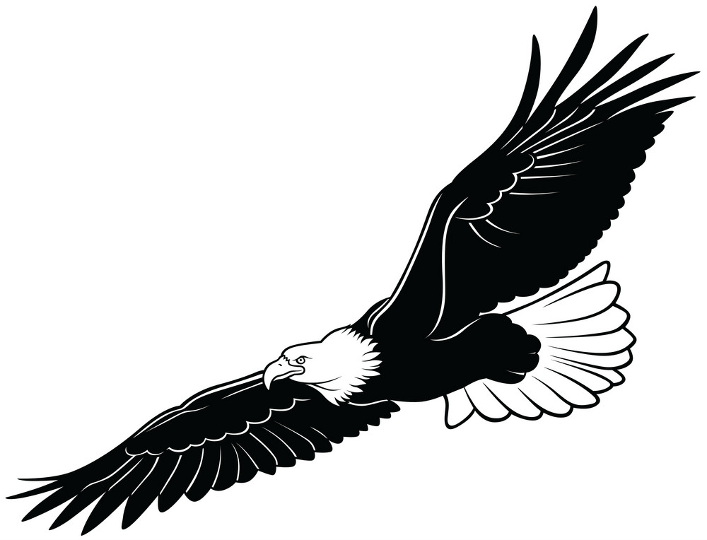 Black and White Flying Eagle clipart
