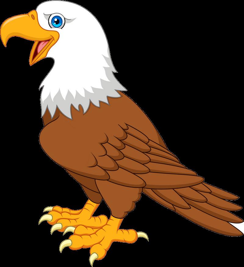 Cartoon Bald Eagle clipart transparent