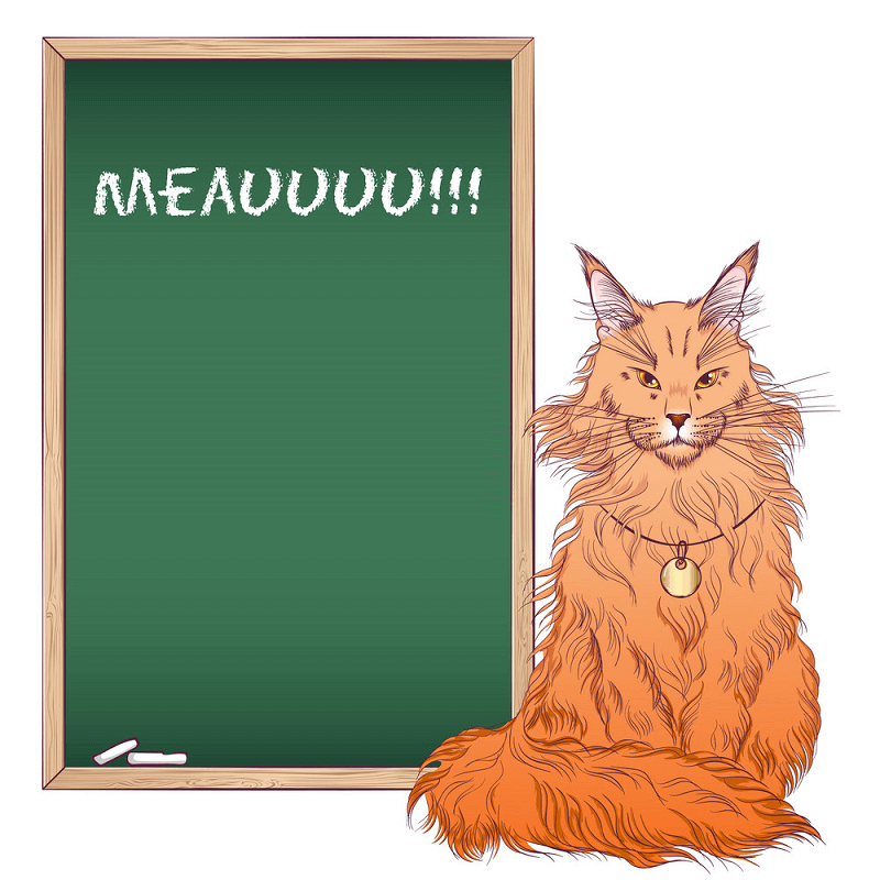 Chalkboard and Maine Coon Cat clipart