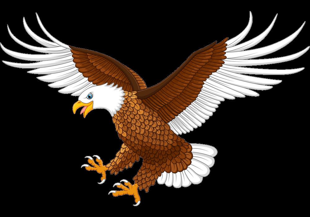 Flying Eagle clipart transparent