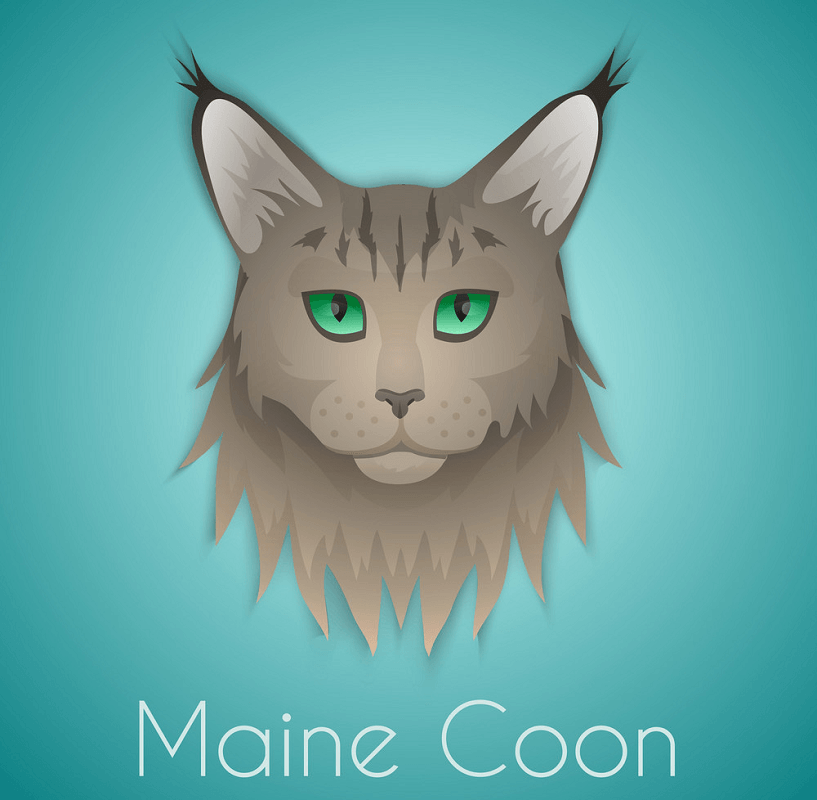 Maine Coon Cat clipart 4
