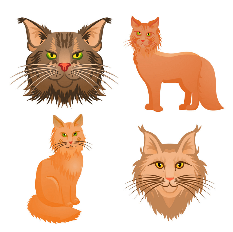 Set of Maine Coon Cats clipart