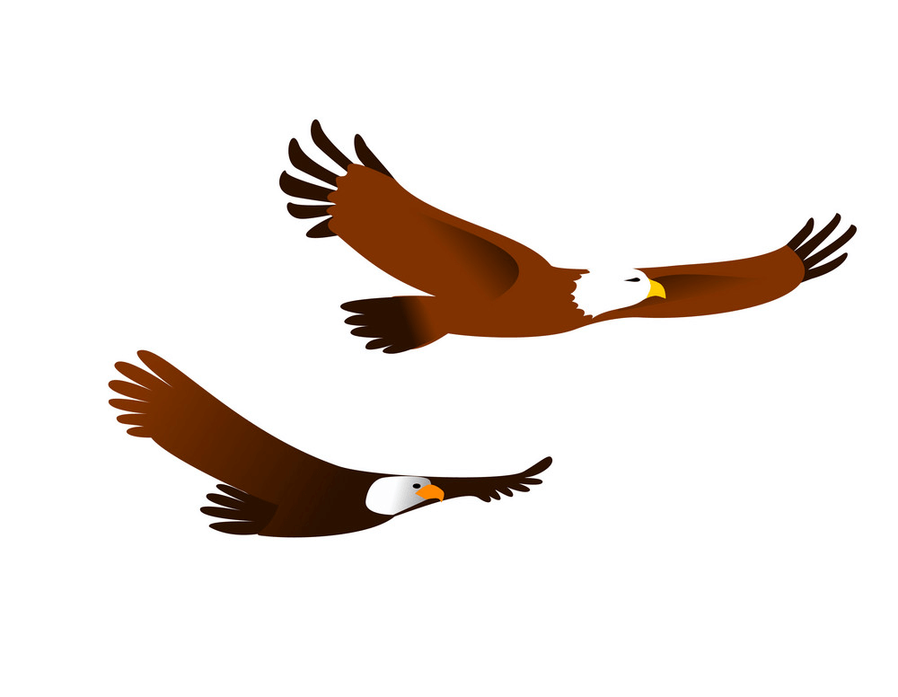 Two Flying Eagle clipart