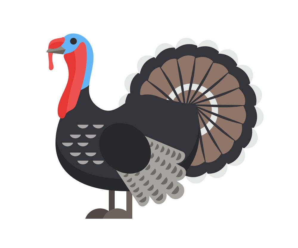 Flat Turkey clipart