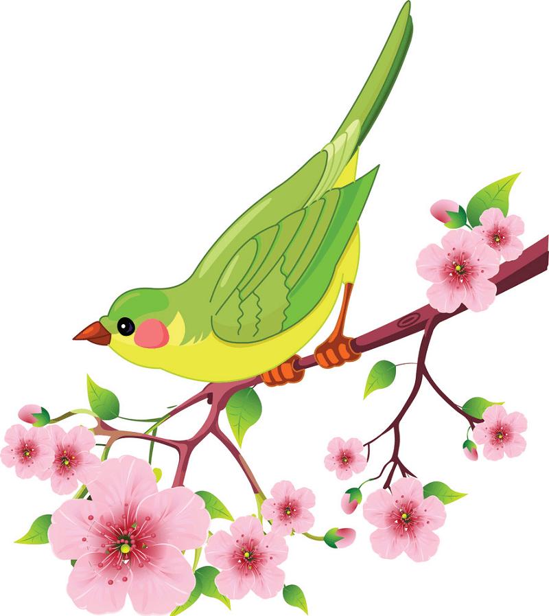 Spring Bird clipart