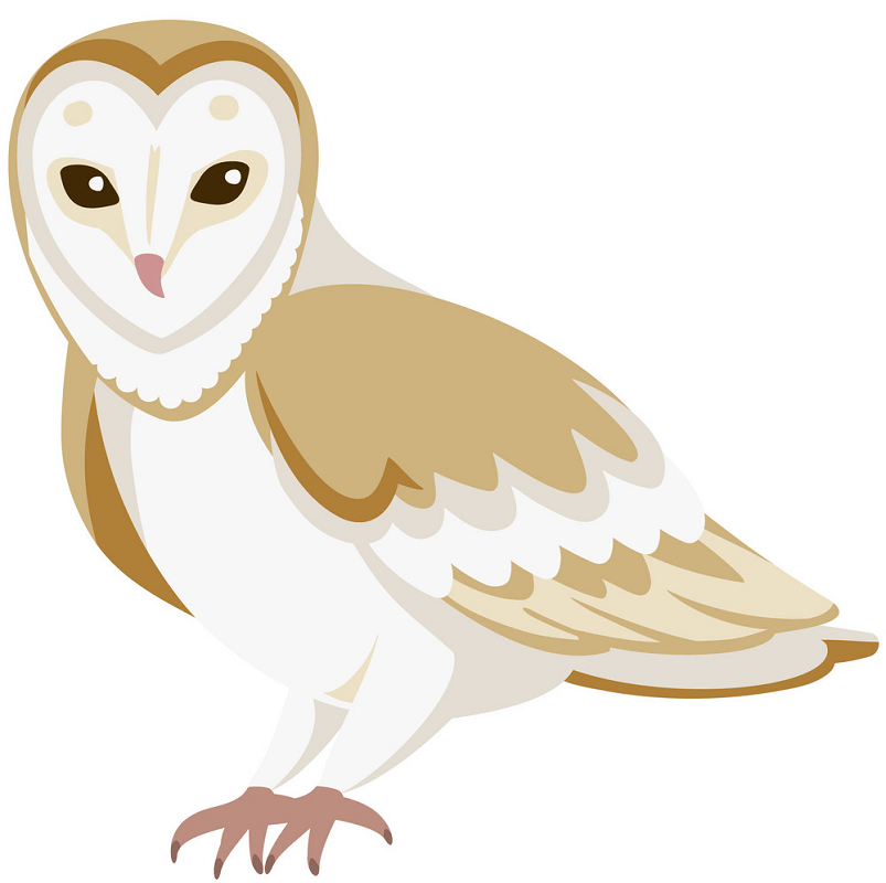 Barn Owl clipart