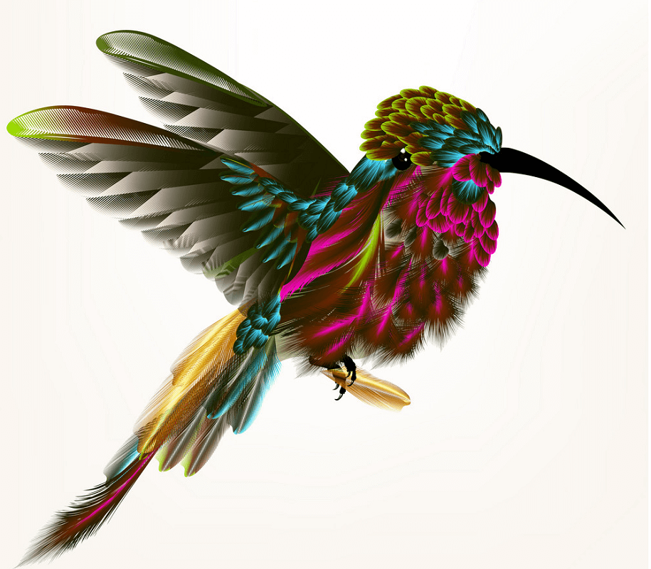 Beautiful Hummingbird clipart