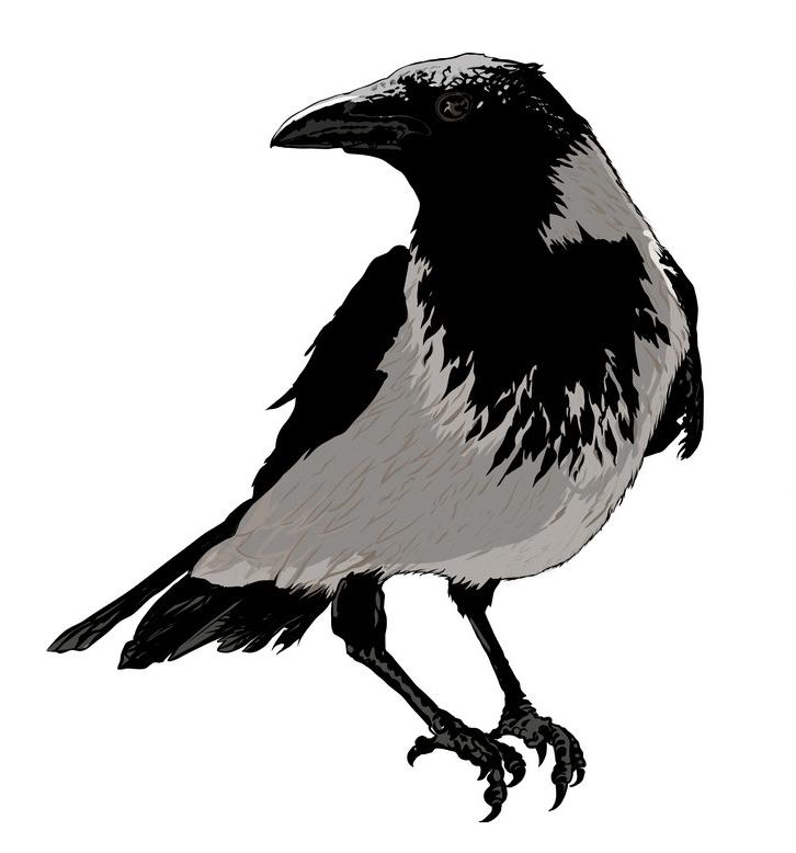 Black Crow clipart