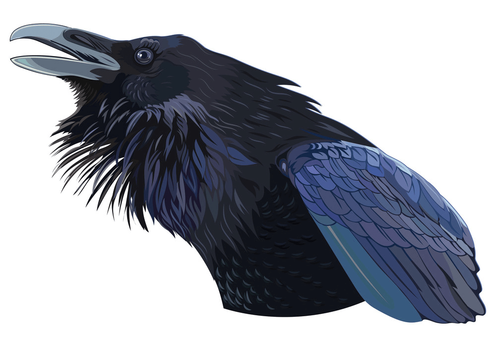 Cawing Black Crow clipart