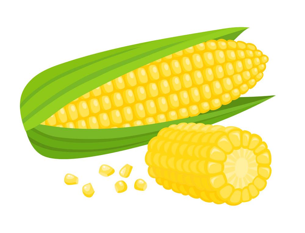 Corn clipart 1