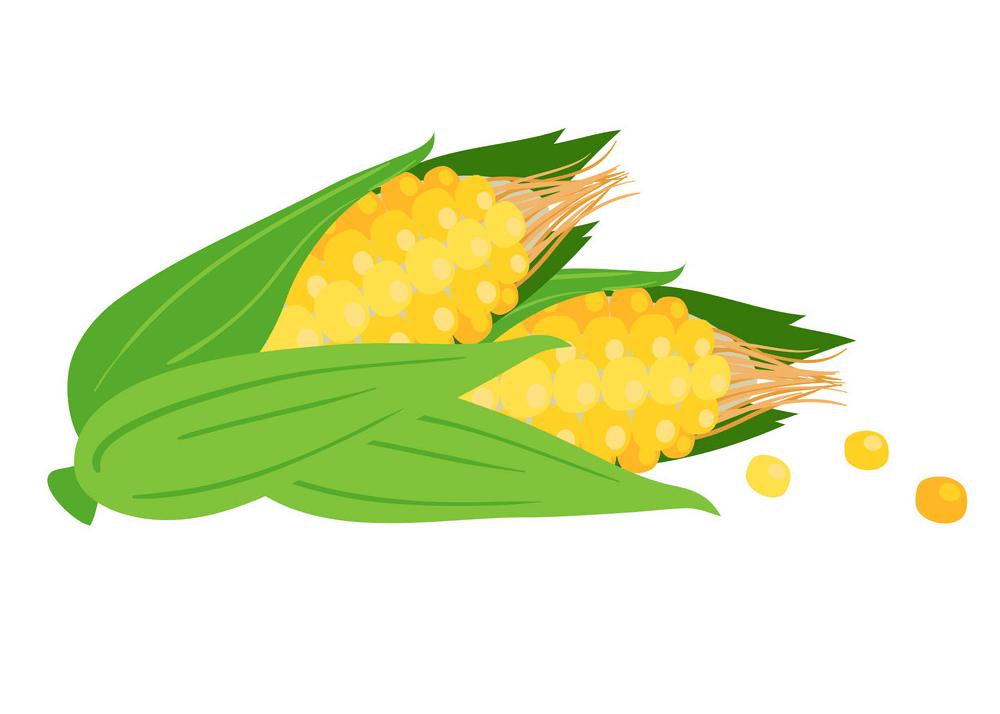 Corn clipart 7