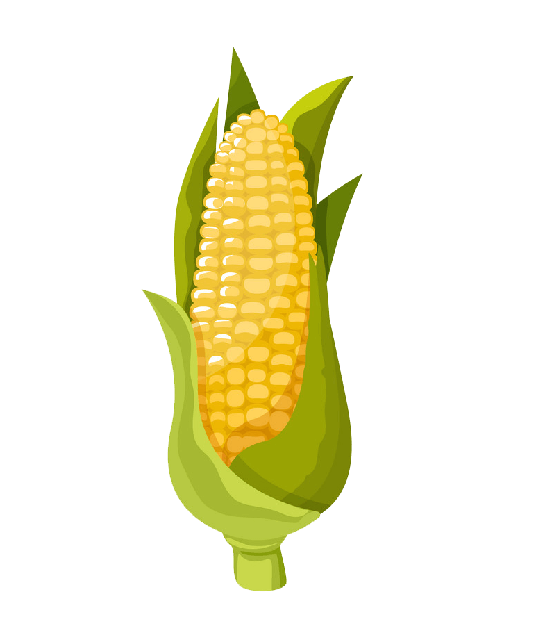 Corn clipart transparent 2