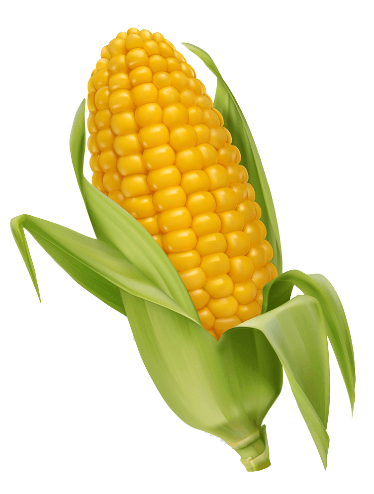 Corn clipart transparent 4