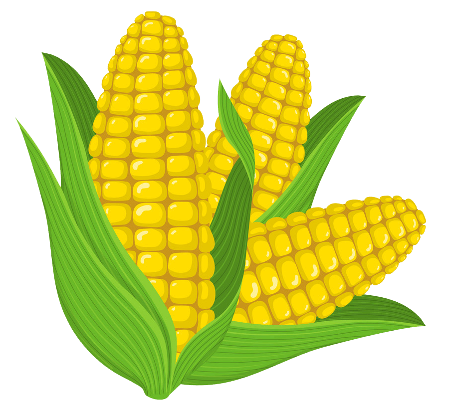 Corn clipart transparent 7