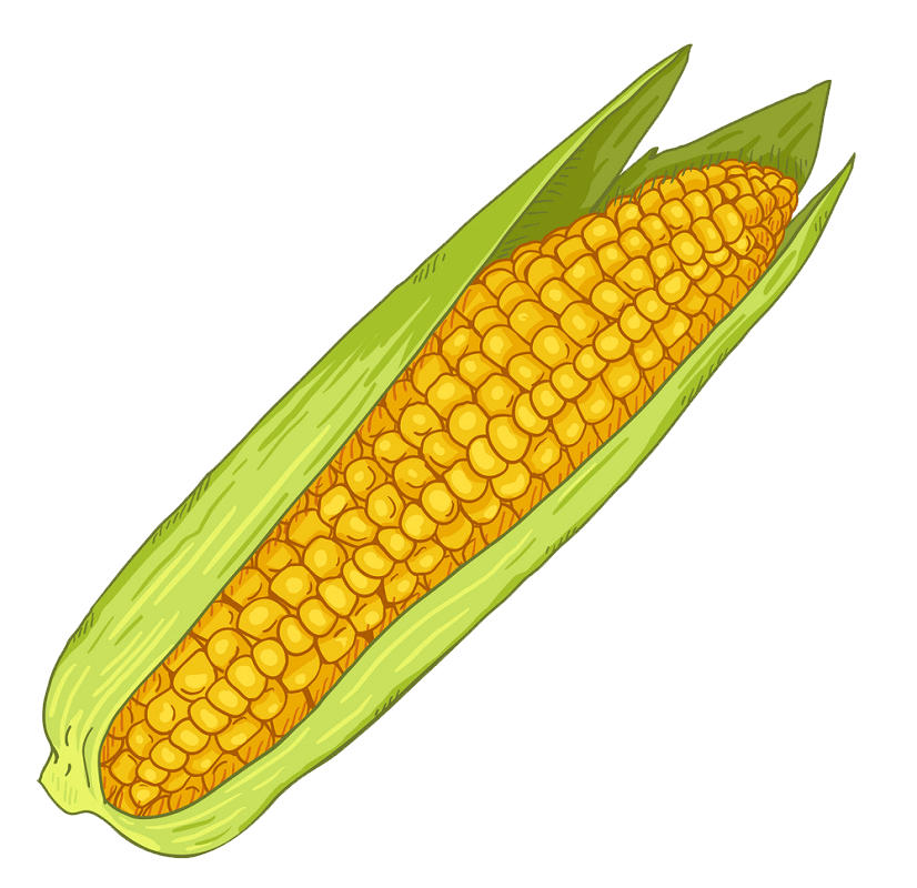 Corn clipart transparent 8