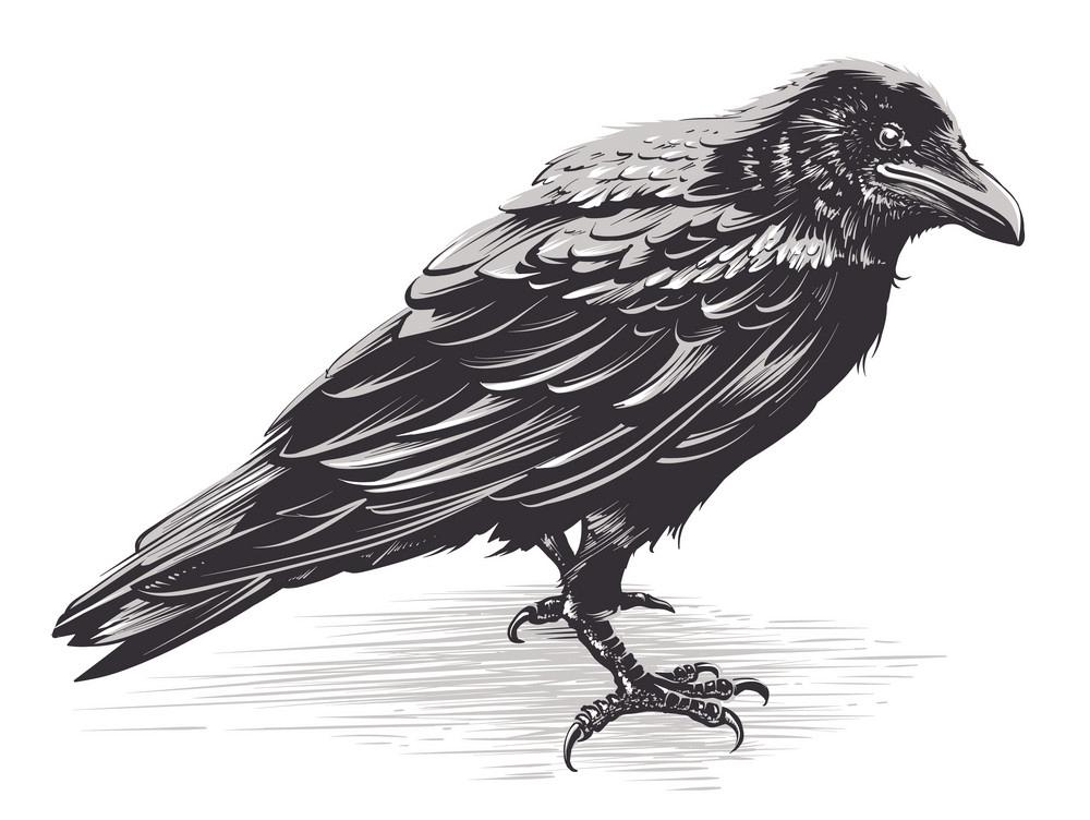 Crow clipart 1
