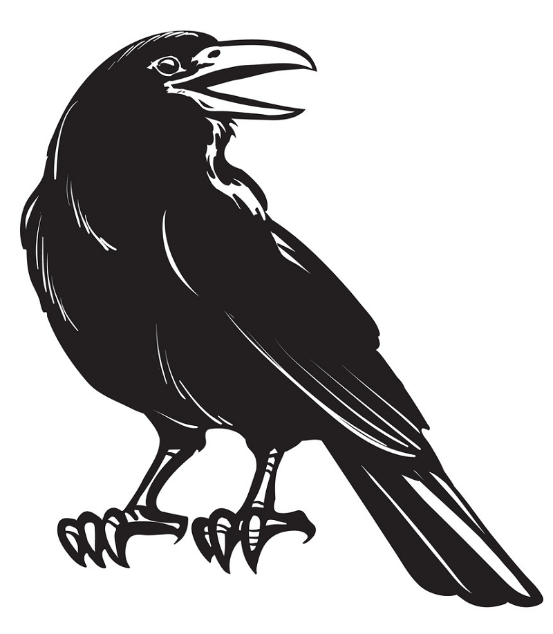 Crow clipart 3
