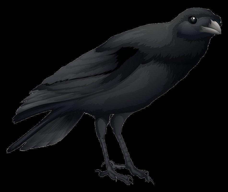 Crow clipart transparent